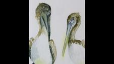 Paint Brown Pelicans in Watercolor