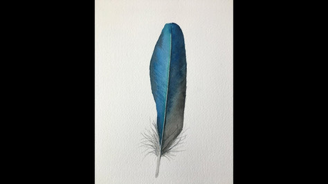 Paint a Blue Feather in Watercolor