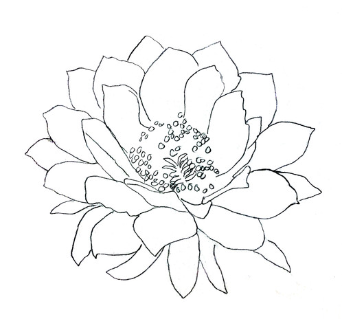 Cactus Flower Outline