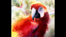 Paint a Scarlet Macaw in Watercolor