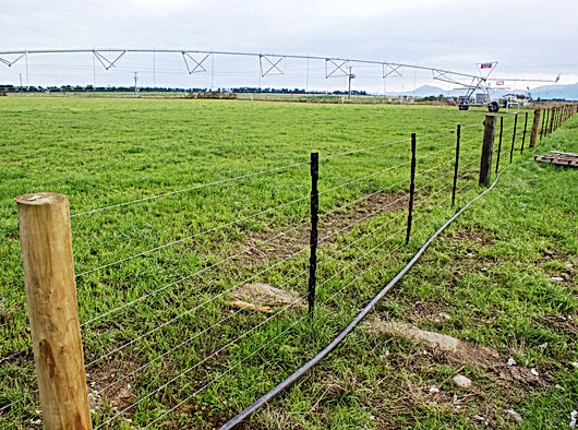 cattle-cow-sheep-goat-pig-fencing