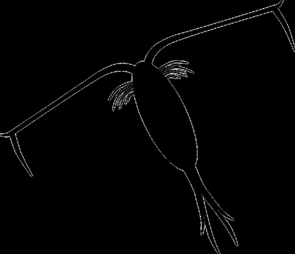 Zooplâncton