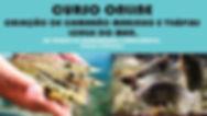 criação de camarão marinho e tlápias