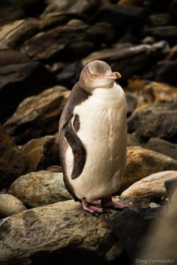 pingouin 01