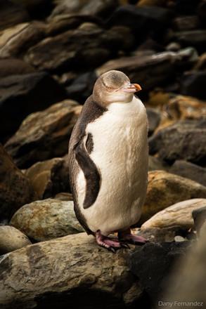 pingouin 01.jpg