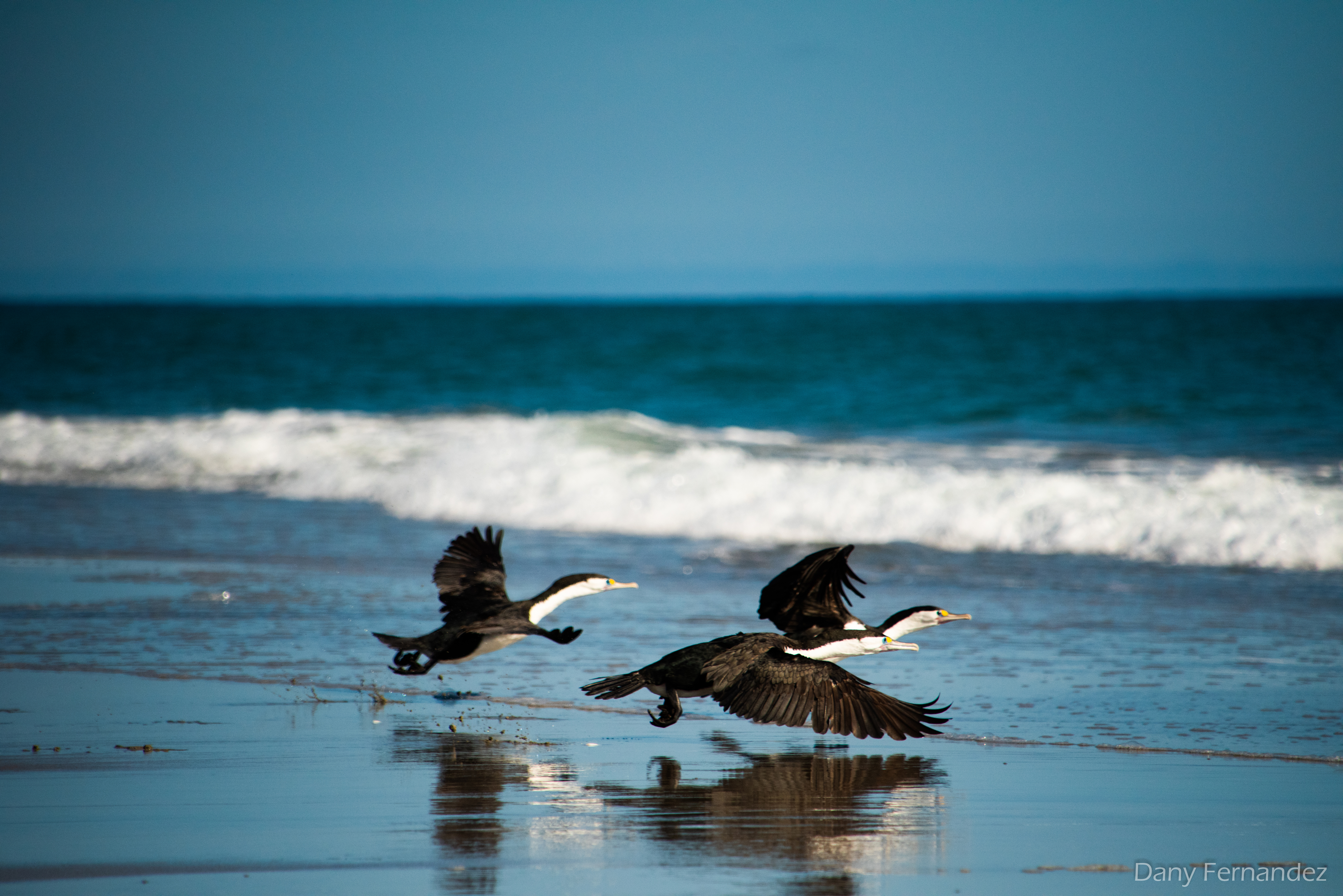 cormoran 01