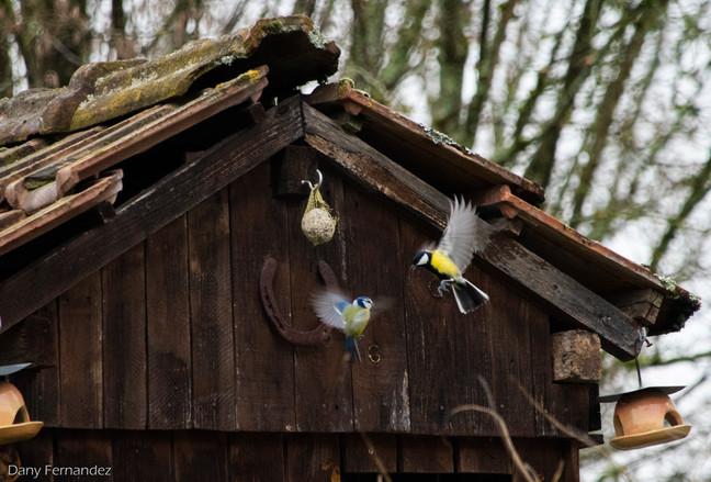 oiseau 01.jpg