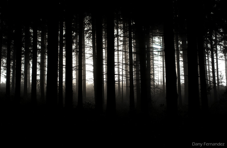 nature 13.jpg
