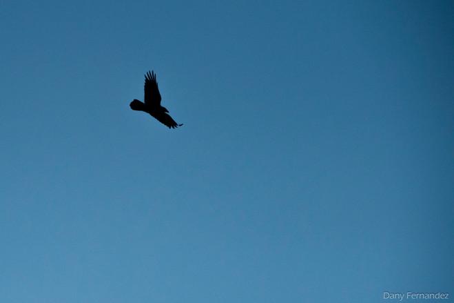 oiseau 04.jpg