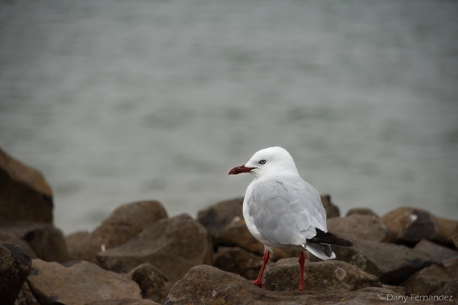 oiseau 13.jpg