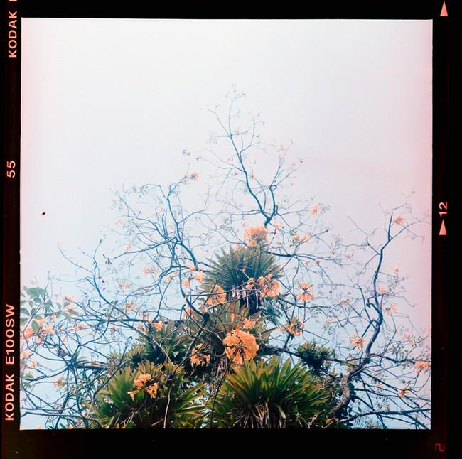 fosfema-fotografia-de-Cayo-Vieira-011.jp