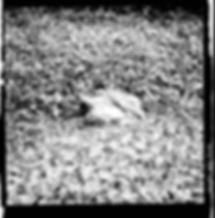 fotografia de Cayo Vieira pertencente a série Introspecção que integra o trabalho Nem frio nem calor: apenas o cheiro de Jamim (2019) . Imagem gravada em película monocromática negativa 120 mm.