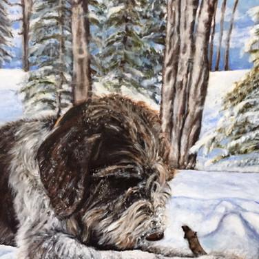 Pet Portrait Watson