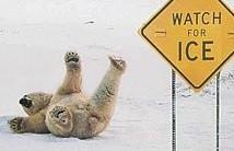 bears slip & fall.jpg