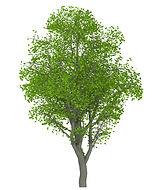 木の伐採 葉山