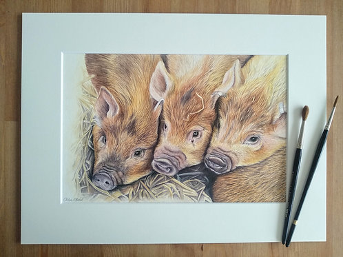 Original - 16x12 Framed Pigs in watercolour