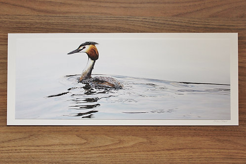"""Great Crested Grebe - """"Passing By"""" - Art Print - Mounted"""