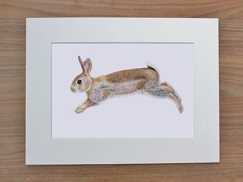 "Bunny - ""Leap for Joy"" - Art Print - Mounted"