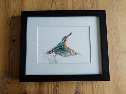 Framed 10x8 Kingfisher Print