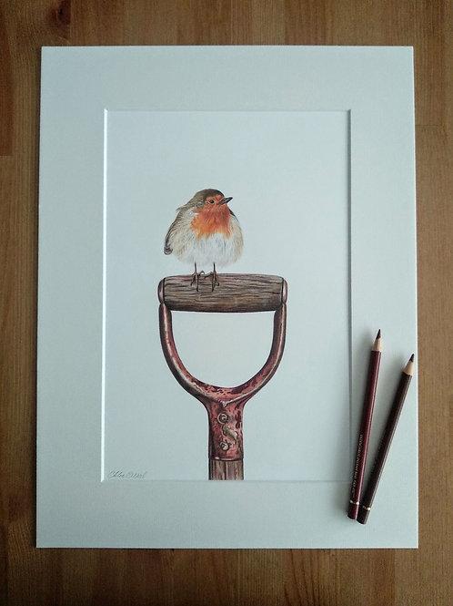 Original - 16x12 Framed Robin in Coloured Pencil