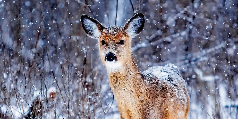 Winter Snow Deer Watercolour Art Class