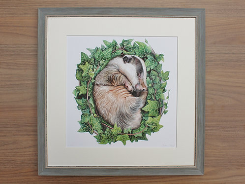 "Badger - ""Bed of Ivy"" - Art Print - Framed"
