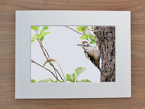 "Woodpecker - ""Spotted"" - Art Print - Mounted"