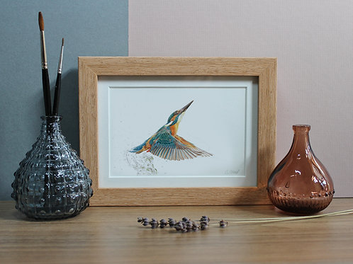 "Kingfisher - ""King of Colour"" - Art Print - Framed"