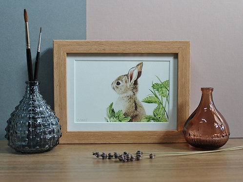 """Rabbit - """"Springtime"""""""
