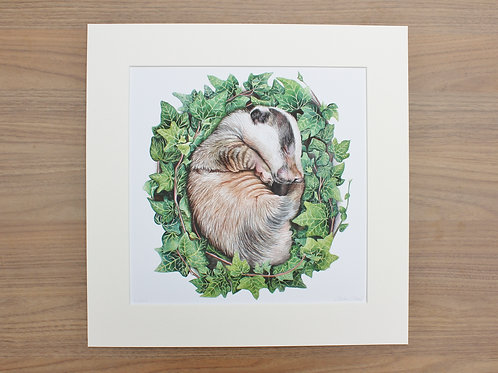 "Badger - ""Bed of Ivy"" - Art Print - Mounted"