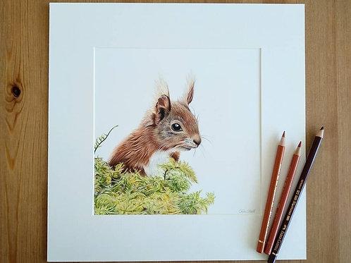 "Squirrel - ""Simply Red"" - Original - Mounted"
