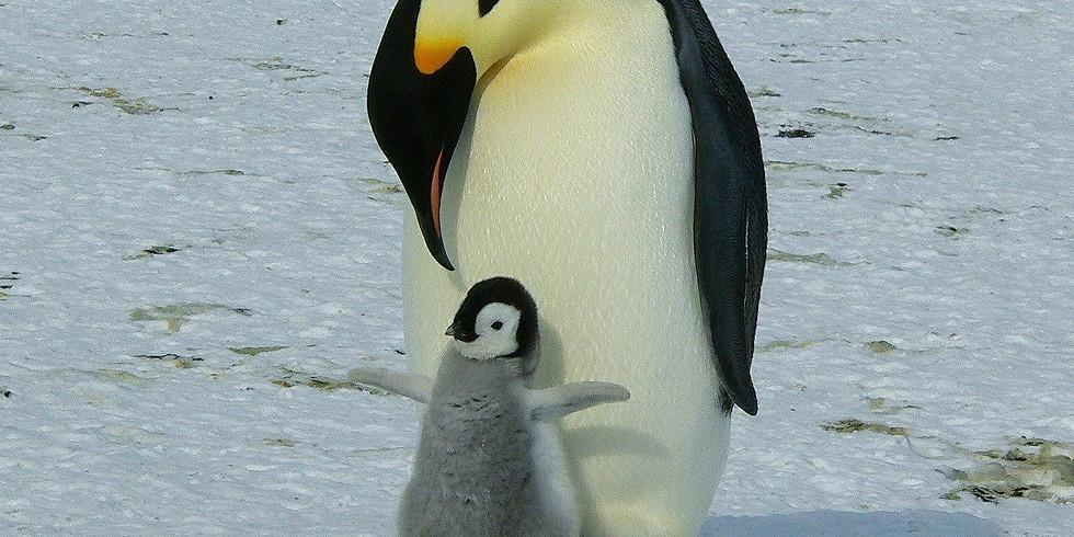 Winter Penguin Watercolour Online Art Class