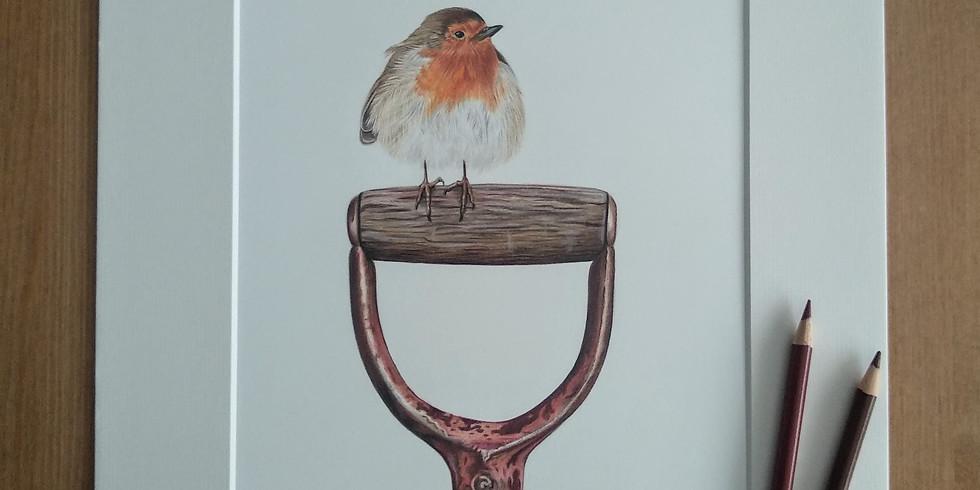 Festive Red Robin Coloured Pencil Online Workshop (1)
