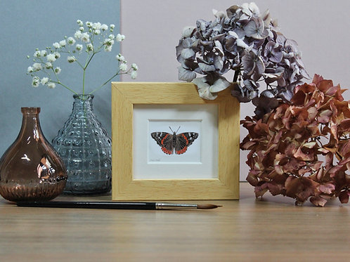 Mini Red Admiral Butterfly Art Print - Framed