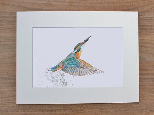 "Kingfisher - ""King of Colour"" - Art Print - Mounted"