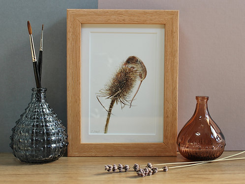 """Harvest Mouse - """"Just made it"""""""