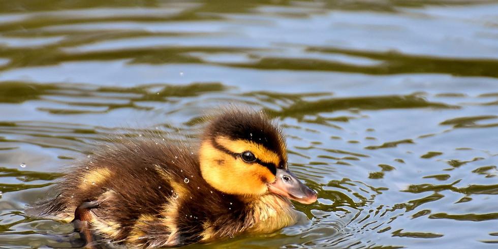 Little Duckling Watercolour Art Class