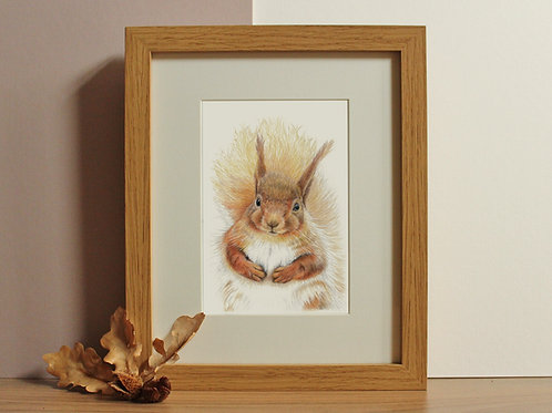 "Red Squirrel - ""Chestnut"""