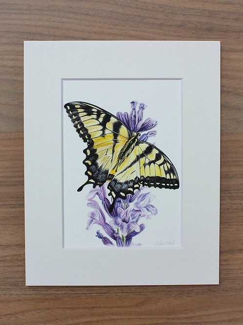 "Butterfly - ""Swallowtail"" - Art Print - Mounted"