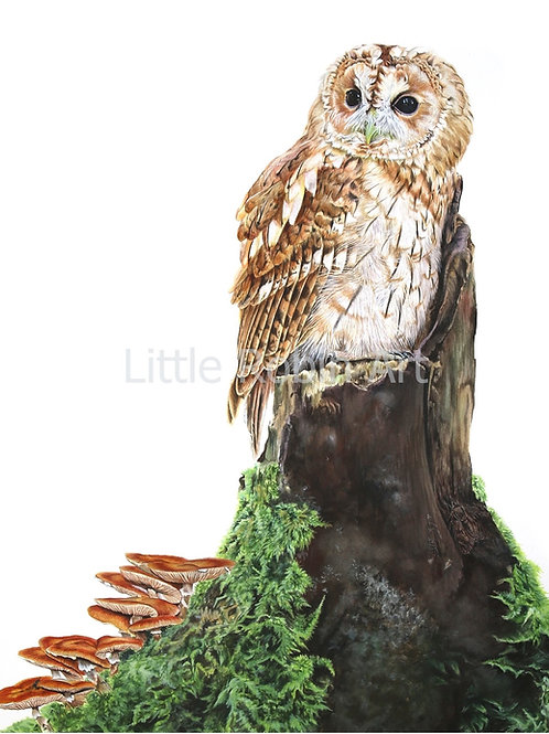 "Tawny Owl - ""Into the Woods"" - Art Print - Mounted"
