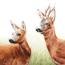 Roe Deer by Chloe O'Neil