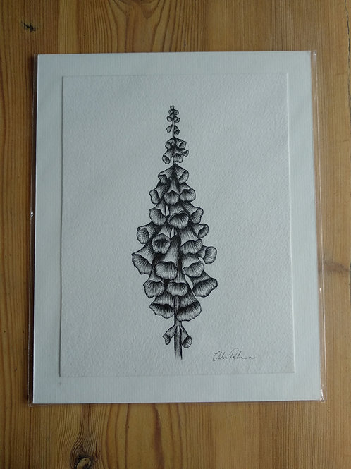 Original - 10x8 Foxglove in Pen