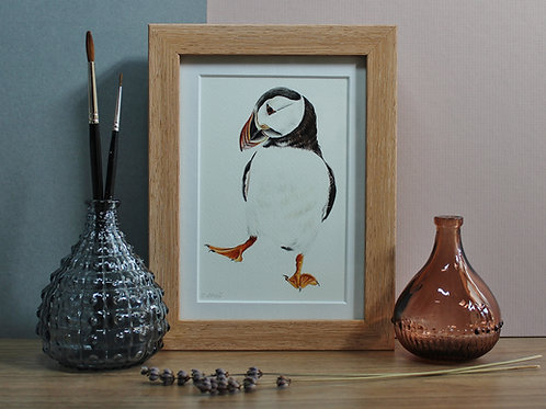 Puffin Art Print - Framed