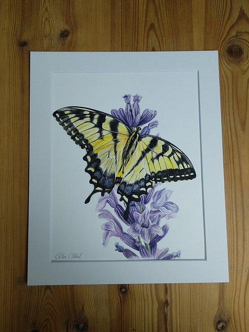 Original - 12x10 Swallowtail Butterfly in Watercolour