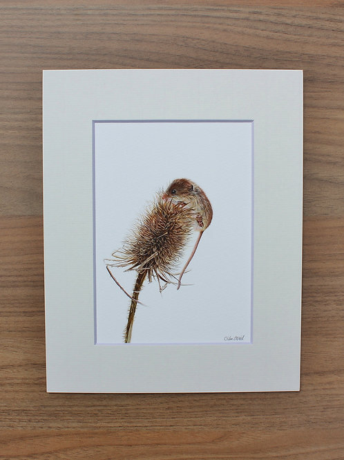 "Harvest Mouse - ""Just Made It"" - Art Print - Mounted"
