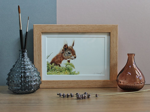 "Red Squirrel - ""Simply Red"" - Art Print - Framed"
