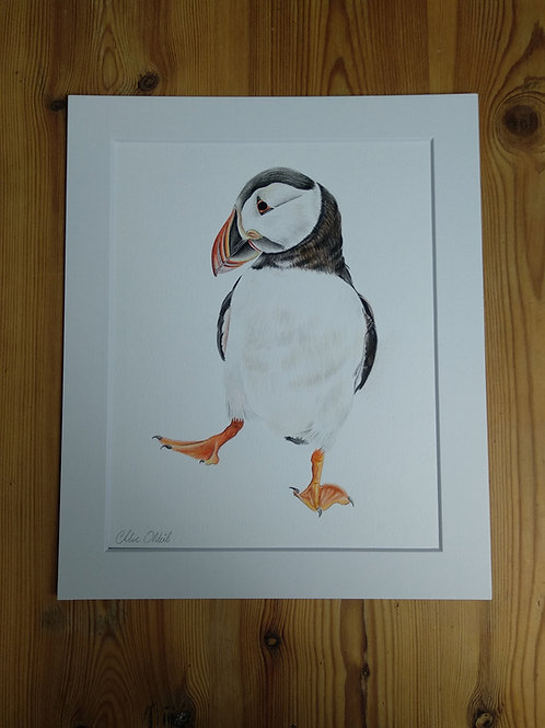 Original - 12x10 Puffin in Watercolour