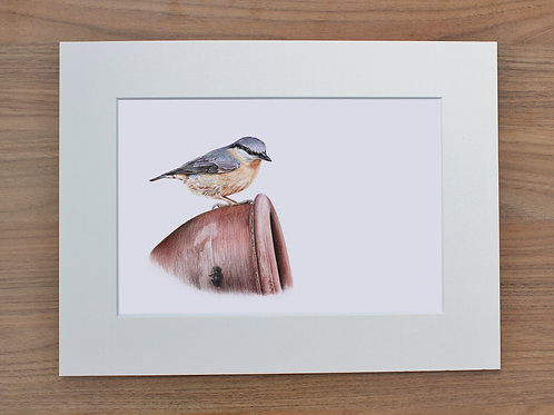 "Nuthatch - ""Garden Visitors"" - Art Print - Mounted"