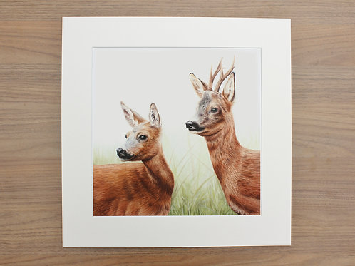 "Roe Deer - ""Courtship"" - Art Print - Mounted"