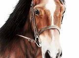 Horse Equestrian Painting